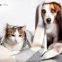 a-wanke-e-pet-friendly-cuidados-ao-lavar-roupa-de-animais-na-maquina.jpg